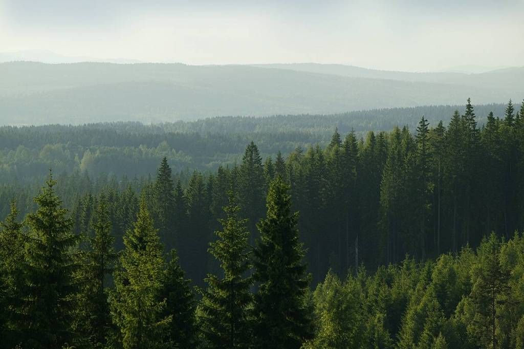 rassegna stampa svedese assosvezia legname bosco Skogsägarna Holmen gestione foreste  conservazione biodiversità salvaguardia