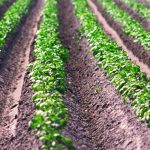 rassegna stampa svedese assosvezia mercato alimentare crescita produzione interna