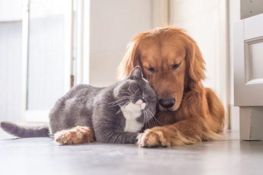 animale domestico codice etico sensibilità rassegna stampa svedese